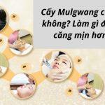 Cấy Mulgwang có tốt không? Làm gì để da căng mịn hơn?